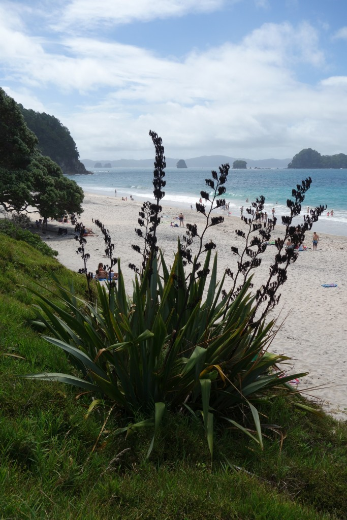 DSC00433 Hahei Beach